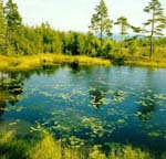 A Ladoga bay.<BR> Photo by: A. Shelekhov, researcher, Laboratory for forest landscape ecology, Forest Research Institute