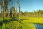 Толвоярви. Перспективная территория экологического туризма