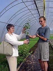 Ознакомительные занятия по выращиванию древесных растений в тепличном комплексе ведет д.б.н. Л.В. Ветчинникова