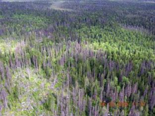 Коренные еловые массивы в национальном парке &quotВодлозерский&quot