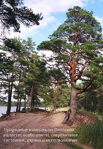Природные комплексы Вепсской волости: особенности, современное состояние, охрана и использование