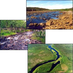 Нерестовые реки Восточной Фенноскандии