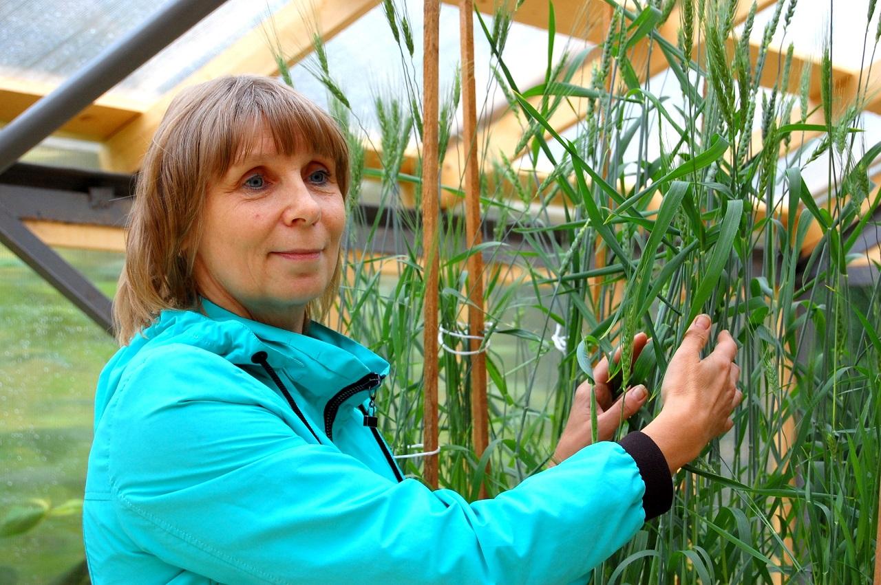 Ведущий научный сотрудник лаборатории экологической физиологии растений Института биологии Наталья Казнина Comments cannot be left on this photo