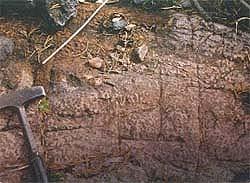 Строматолиты Djulmekella djulmekensis Mak., 1983 г. в обнажении на о. Рудник, оз. Сундозеро