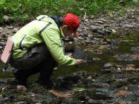 Научный сотрудник В.В. Тимофеева фиксирует информацию о гидрофильных мхах.