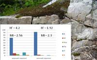 Почвы с кислыми подстилающими горными породами (гранитами)