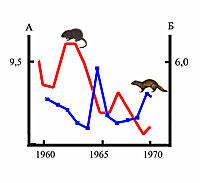 Изменение численности ондатры по данным заготовок шкурок, тыс. шт. (А) и американской норки, следов на 10 км маршрута (Б) в Карелии