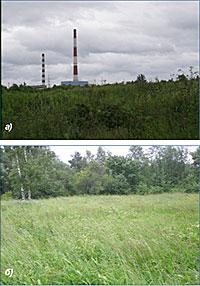 Травянистые сообщества, произрастающие в 0,5 км (А) и 8 км (Б) от Кондопожского ЦБК