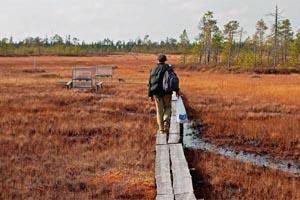 Изучение болот