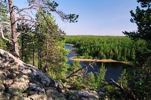Леса в устье реки на побережье Белого моря