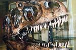 Динозавр из коллекции Университета в Стони Брук
